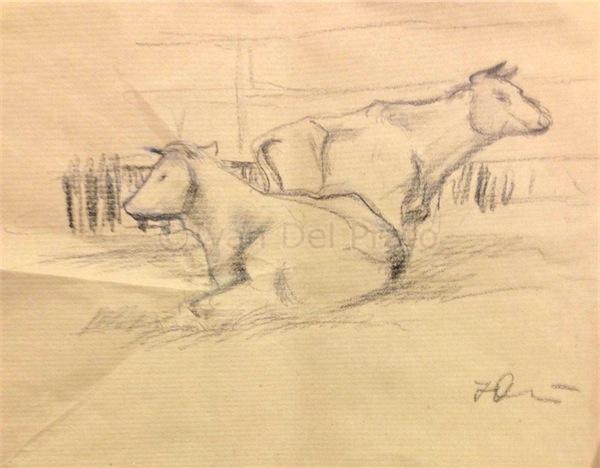 Vacca sdraiata ed in piedi